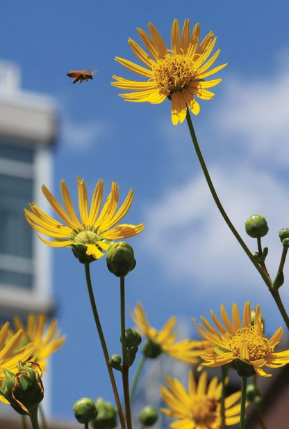bee, yellow flower, high rise, manhattan, high line, NYC, postcard, save the bees