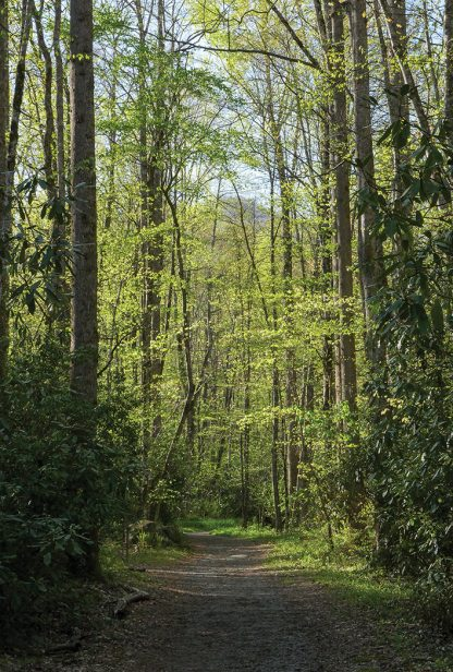 Forest trail, Great Smoky Mountains National Park, North Carolina