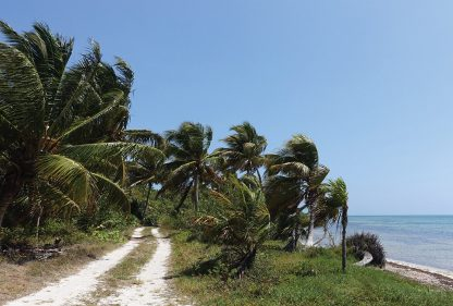 palm tree trail, beach road, wind-swept, Sian Kaan, Mexico, postcard, multiple choice