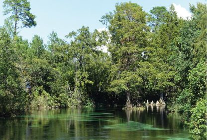 Weeki Wachee River in Florida