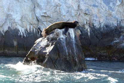 sea lion, Lands End, Cabo, Mexico, postcard