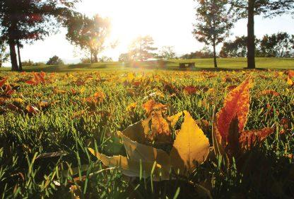 autumn leaves, city park, postcard