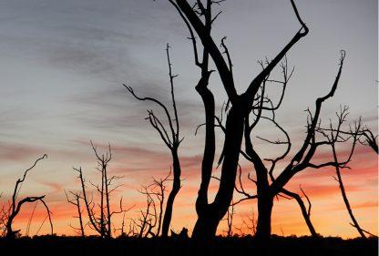 Sunset sky behind stripped trees, Mesa Verde, Colorado