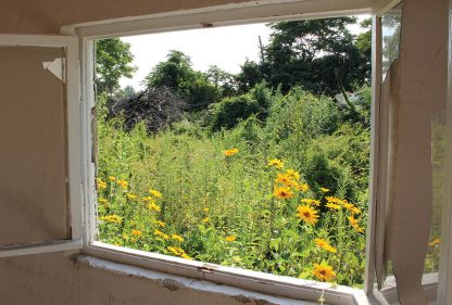 View from broken window in abandoned Schrebergarten, allotment in Berlin, blooming urbex
