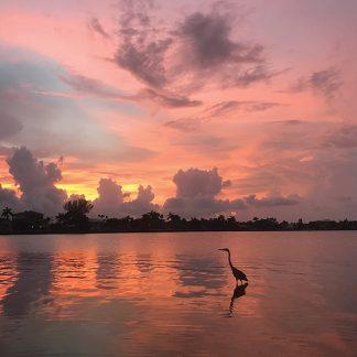 Heron and sunset sky reflected in skinny water, Belleair, Florida