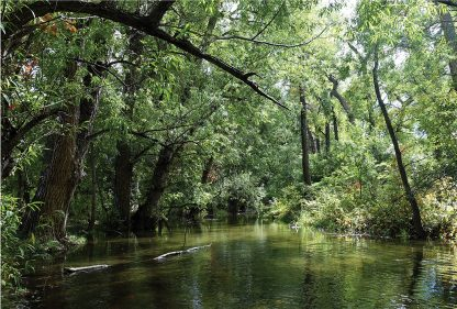 Forest river in Colorado, postcard