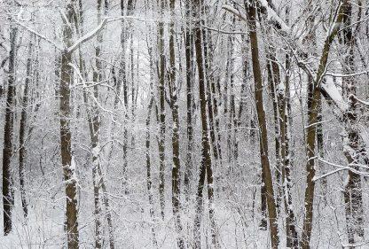 Snowy winter forest, Czech Republic, postcard