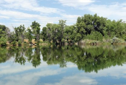 Green trees and blue sky reflected in still pond, reflection postcards, Happier Place