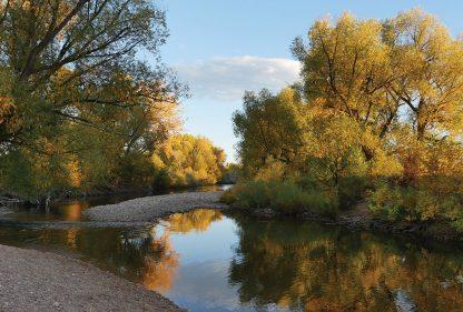 Fall colors, Golden Hour, Riverbend, Poudre River, Fort Collins, Colorado, postcard