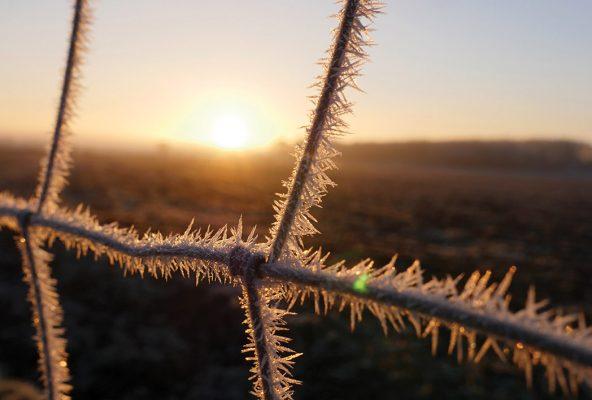 Hoarfrost, fence, sunrise, Germany
