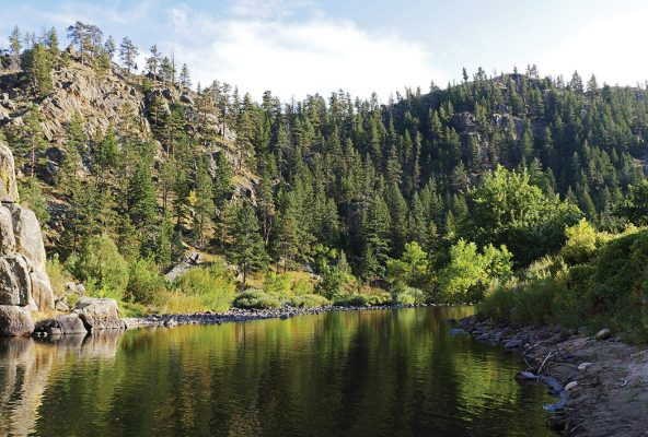 Forest, hill, river, Gateway, Poudre Canyon, Colorado