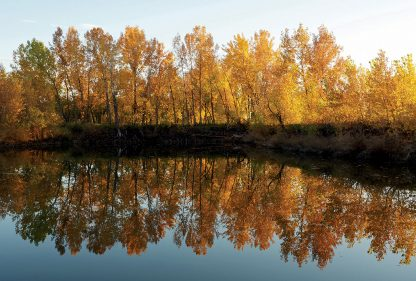 Bright fall foliage trees reflected in mirror pond, Colorado, Happier Place