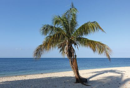 Palm tree, Playa Ancon, Cuba, beach, postcard