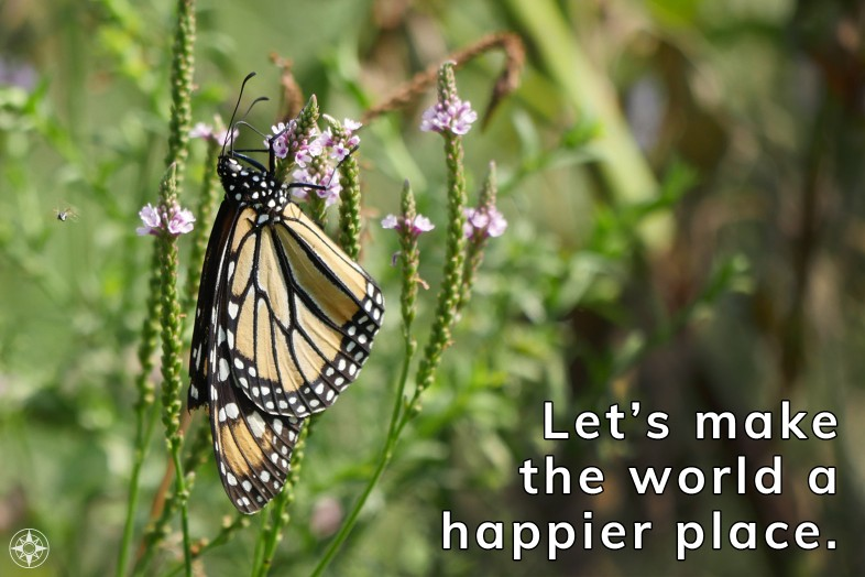 Let's make the world a happier place, monarch butterfly on wildflower in new york city.