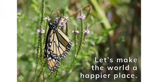 Let's make the world a happier place, monarch butterfly, new york
