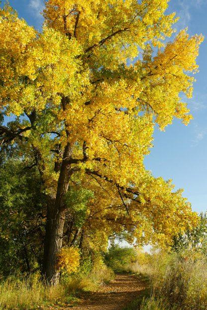 Hiking trail, fall foliage, Colorado