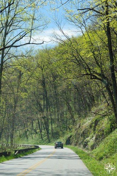 Car on mountain road, tall trees, Blue Ridge Mountains