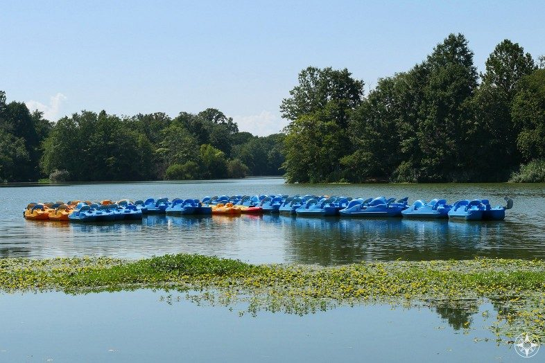 Flock of blue and orange pedal boats waiting for you on Prospect Park Lake
