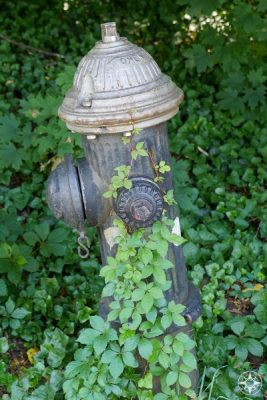 NYC Hydrant covered in green plant, Brooklyn
