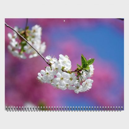 apple tree blossom, white spring blossom, pink blossoms, blue sky, nature photography calendar, 2020, Happier Place, March