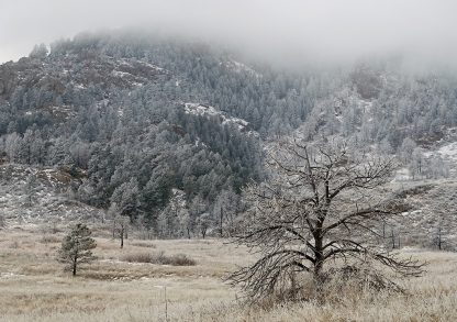 Tree, meadow, and hill covered in frost and fog in Colorado