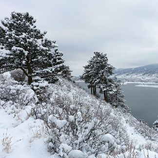 snow-covered trees above icy lake, Horsetooth Reservoir, Colorado, folded greeting card, pic156: south snow trees