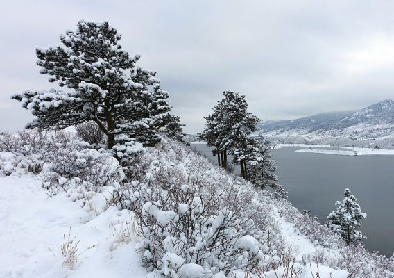 snow-covered trees above icy lake, Horsetooth Reservoir, Colorado, greeting card