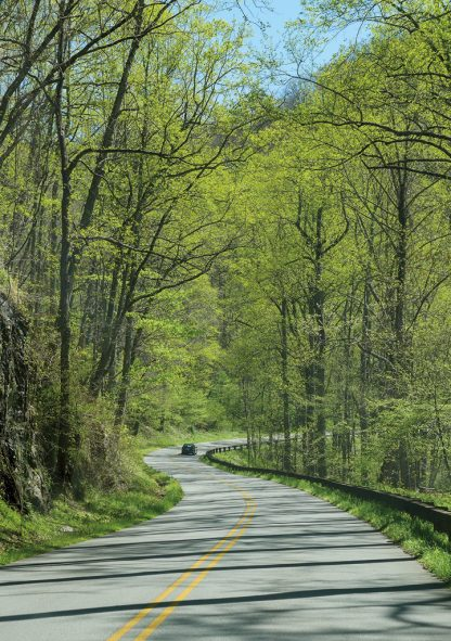 Car on curvy hill road through spring forest, Blue Ridge Mountains, North Carolina, pic158: Blue Ridge road, pic158 vert green Blue Ridge Road, folded greeting card