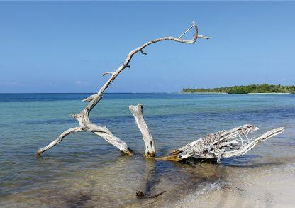 Beached tree, white tree, Caribbean Sea beach, Mexico, blue sky