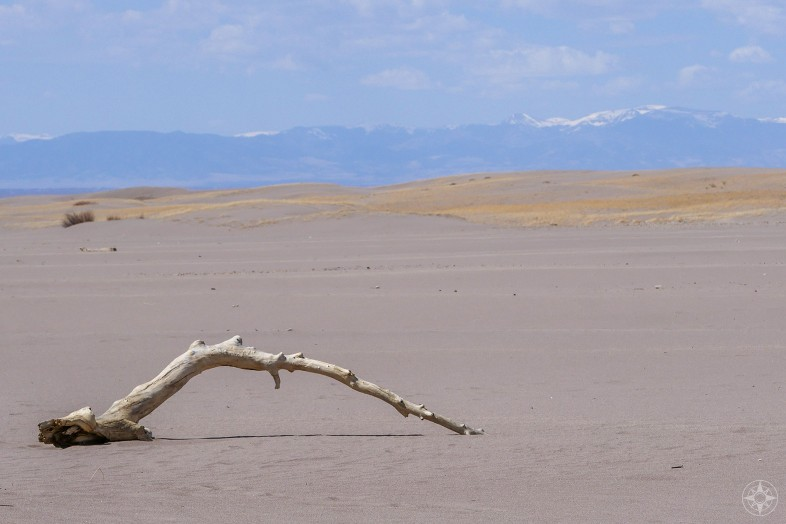 Dead white tree limb, western view over the sand field to the San Juan Mountain Range from the Great Sand Dunes National Park in Colorado