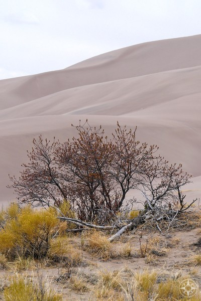 Colorful Colorado: plantlife during offseason, great dunes, happierplace