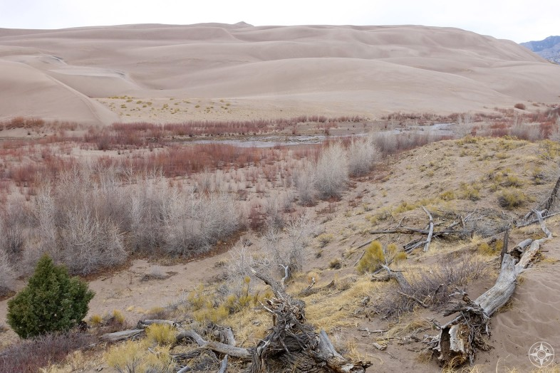 Mostly dried up Medano Creek and plants in Great Sand Dunes National Park, Colorado.