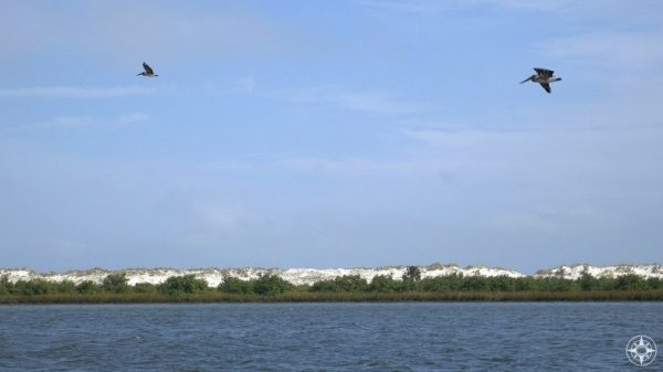 Pelicans over Salt Run in Anastasia State Park, Florida - HappierPlace