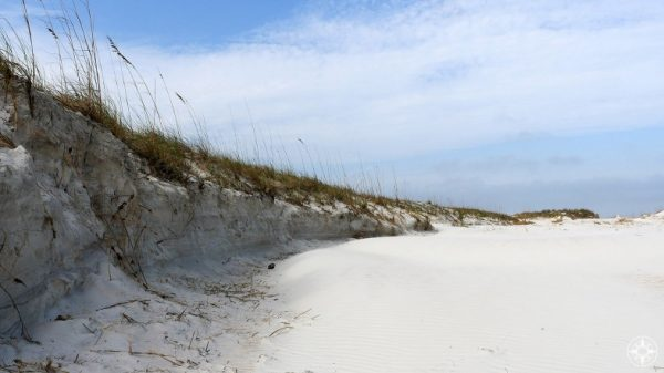 Ancient dunes in Anastasia State Park, Florida - Happier Place