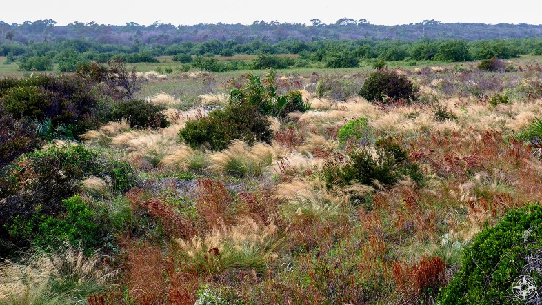 Colorful plants of the wetlands in Anastasia State Park, Florida - HappierPlace