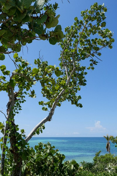 Green trees, blue-green water and blue sky of the Florida Keys. A Happier Place