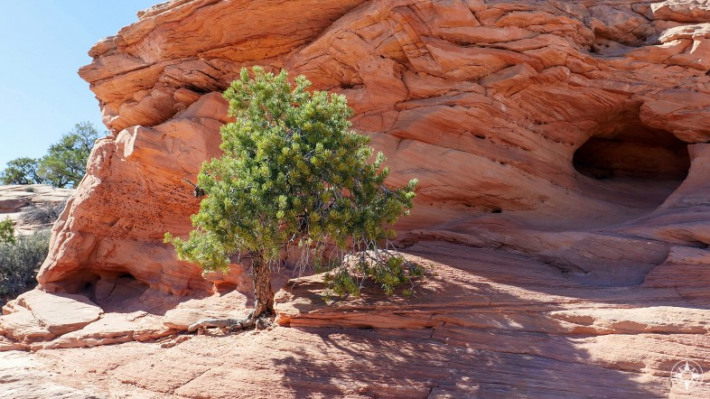Natural cave and tree surviving on the red rocks near Moab
