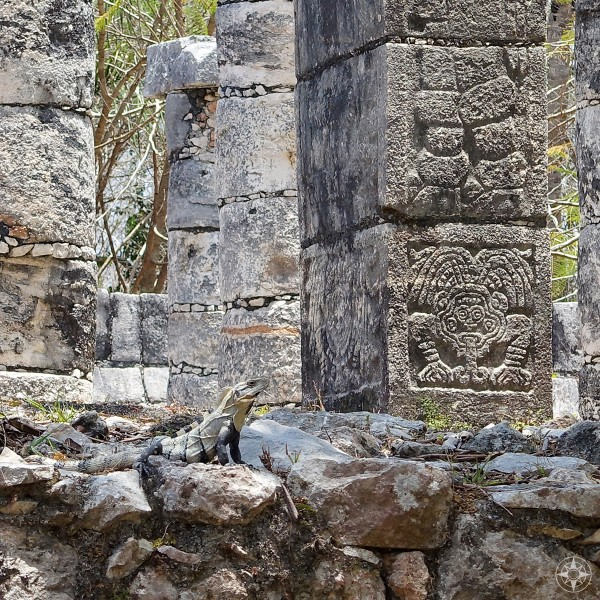 iguana camouflaged among among the Group of the Thousand Columns