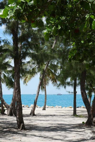 Sand, Australian Pines and the sea, amazing colors at Fort Zachary Taylor, Key West