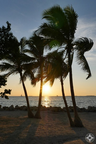 Sunset between windswept palm trees in Key West