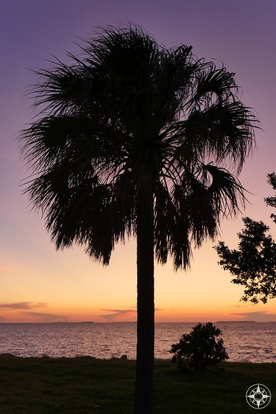 purple and orange post-sunset sky and water behind silhouetted palm tree, Key West, Florida