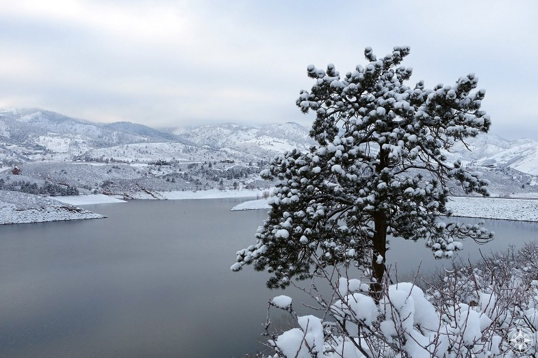 Snow-covered tree over Horsetooth Reservoir in Colorado, winter, Happier Place
