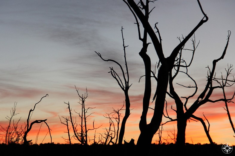 Sunset behind trees burnt by wildfire in Mesa Verde National Park.