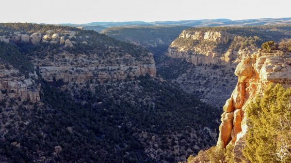 Navajo Canyon seen from Chepa Mesa in Mesa Verde National Park, Colorado.