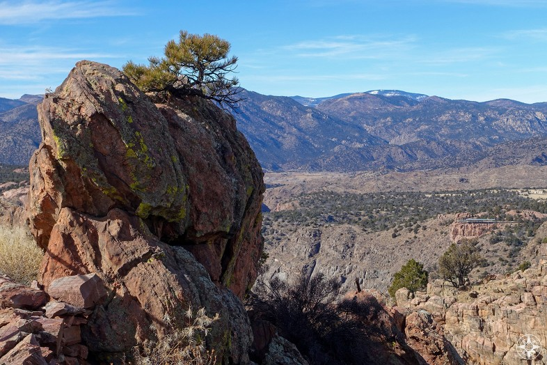 Tree growing out of rock above the Royal Gorge in Colorado.
