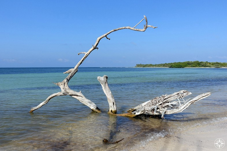 Sun-bleached tree in the clear water at the beach in Sian Ka'an Biosphere Reserve, Tulum, Mexico, Happier Place