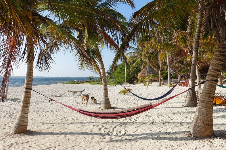 Dogs and hammocks between palm tress on the beach in Xamach Dos, Sian Kaan, Tulum, Mexico