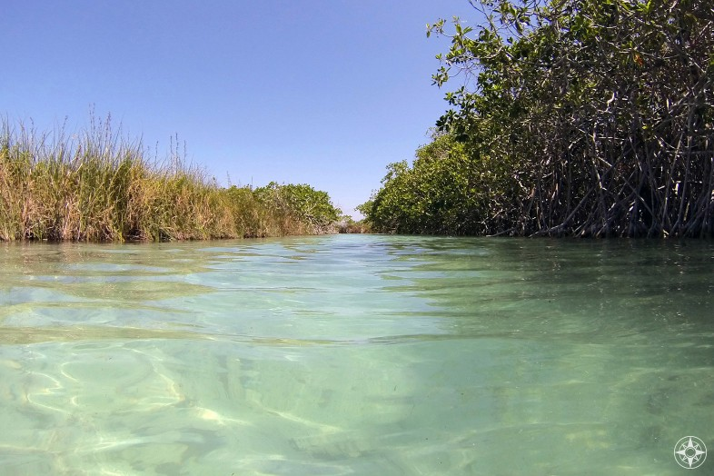 Your view as you float down a Maya trade canal in Sian Ka'an.