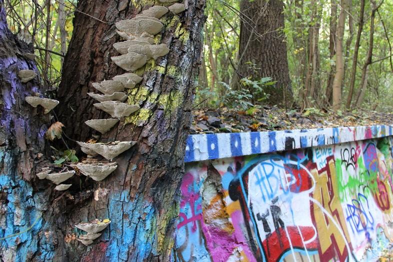 Fungi on tree covered in graffiti besides colorful graffiti wall, Natur-Park Südgelände, Berlin