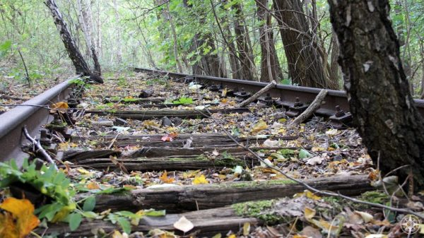 Abandoned train tracks covered in leaves and trees, leading into forest, Natur-Park Südgelände, Berlin